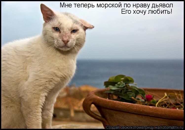 Котоматрица: Мне теперь морской по нраву дьявол Его хочу любить!