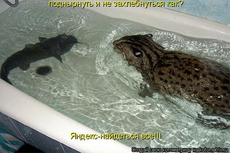 Котоматрица: поднырнуть и не захлебнуться как? Яндекс-найдеться все!!!