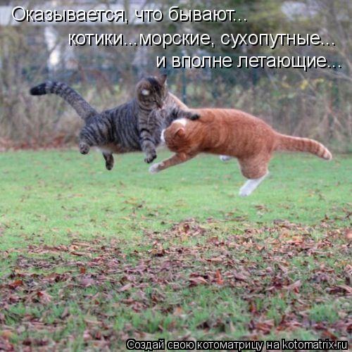 Котоматрица: Оказывается, что бывают... котики...морские, сухопутные... и вполне летающие...