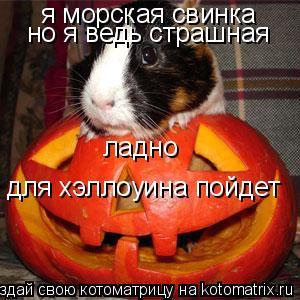 Котоматрица: я морская свинка но я ведь страшная ладно для хэллоуина пойдет