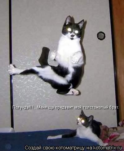 Котоматрица: Полунда!!! . Меня ща придавит мой толстожопый брат.