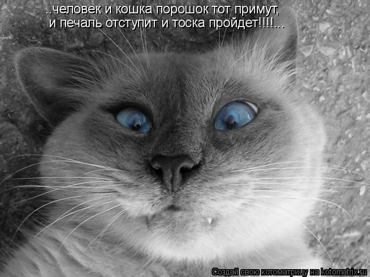 Котоматрица: ..человек и кошка порошок тот примут, и печаль отступит и тоска пройдет!!!!...