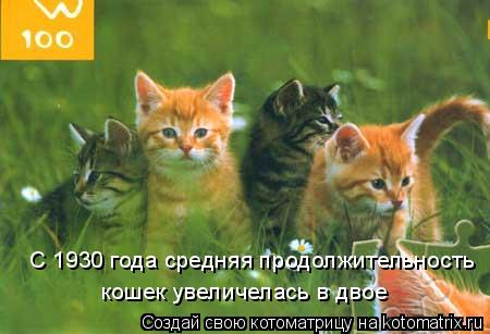Котоматрица: С 1930 года средняя продолжительность кошек увеличелась в двое