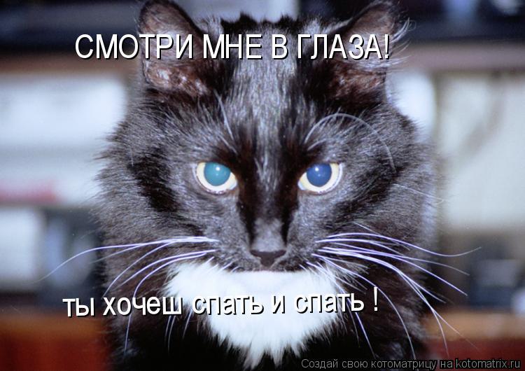 Котоматрица: СМОТРИ МНЕ В ГЛАЗА! ты хочеш спать и спать !