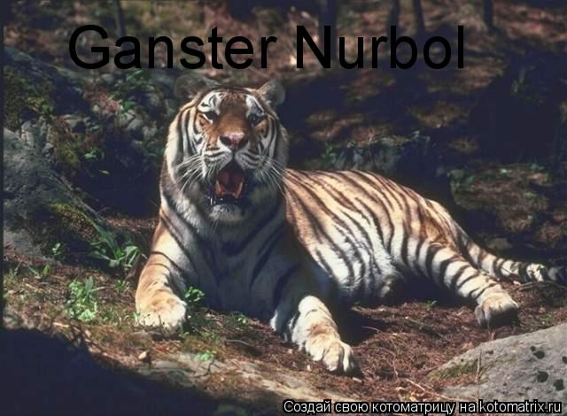 Котоматрица: Ganster Nurbol Ganster Nurbol