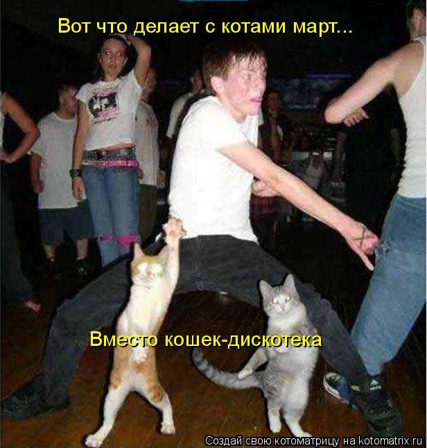Котоматрица: Вот что делает с котами март... Вместо кошек-дискотека