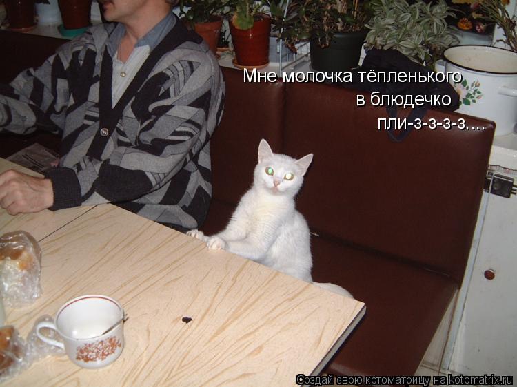 Котоматрица: Мне молочка тёпленького в блюдечко пли-з-з-з-з....