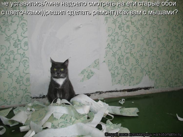 Котоматрица: че уставились?мне надоело смотреть на ети старые обои с цветочками))решил сделать ремонт))как вам с мышами?