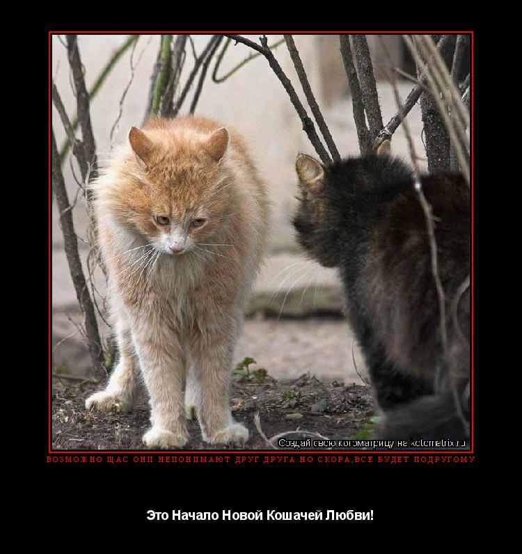 Котоматрица: Возможно Щас Они Непонимают Друг Друга.но скора,всё будет подругому Это Начало Новой Кошачей Любви!