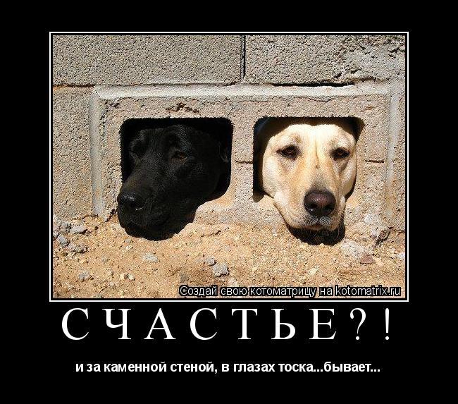 Котоматрица: счастье?! и за каменной стеной, в глазах тоска...бывает...