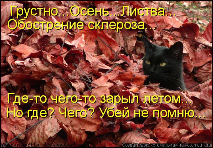 Котоматрица: Грустно...Осень...Листва... Обострение склероза... Где-то чего-то зарыл летом... Но где? Чего? Убей не помню...