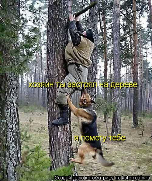 Котоматрица: хозяин ты застрял на дереве я помогу тебе