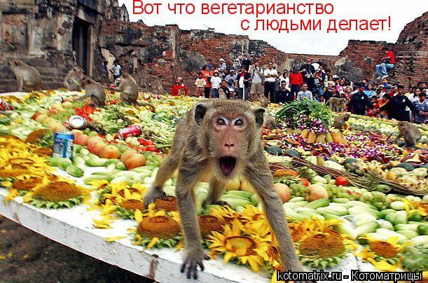 Котоматрица: Вот что вегетарианство  с людьми делает!