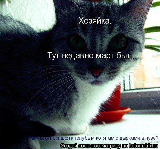 Котоматрица: Хозяйка. Тут недавно март был.. Как ты относишся к голубым котятам с дырками в пузе?