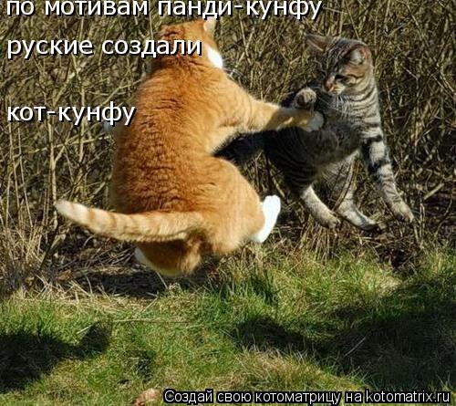 Котоматрица: по мотивам панди-кунфу  руские создали  кот-кунфу