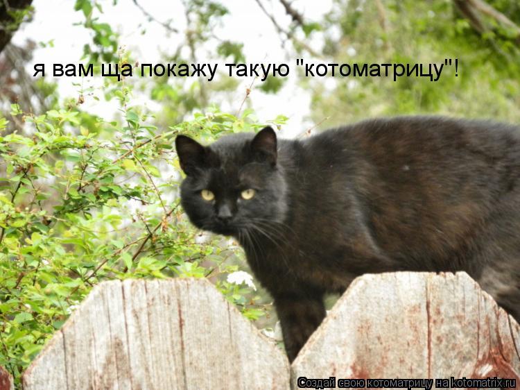 "Котоматрица: я вам ща покажу такую ""котоматрицу""!"