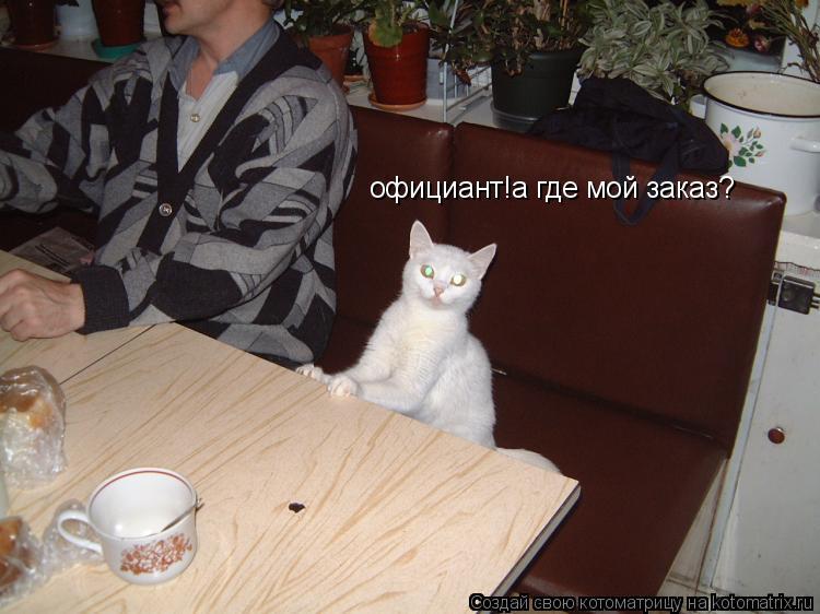 Котоматрица: официант!а где мой заказ?