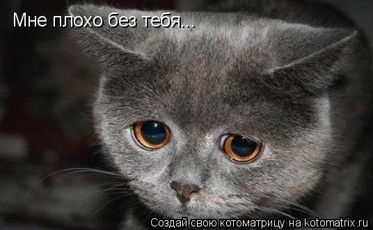 Котоматрица: Мне плохо без тебя...