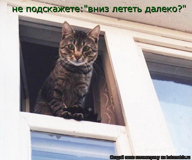 """Котоматрица: не подскажете:""""вниз лететь далеко?"""""""