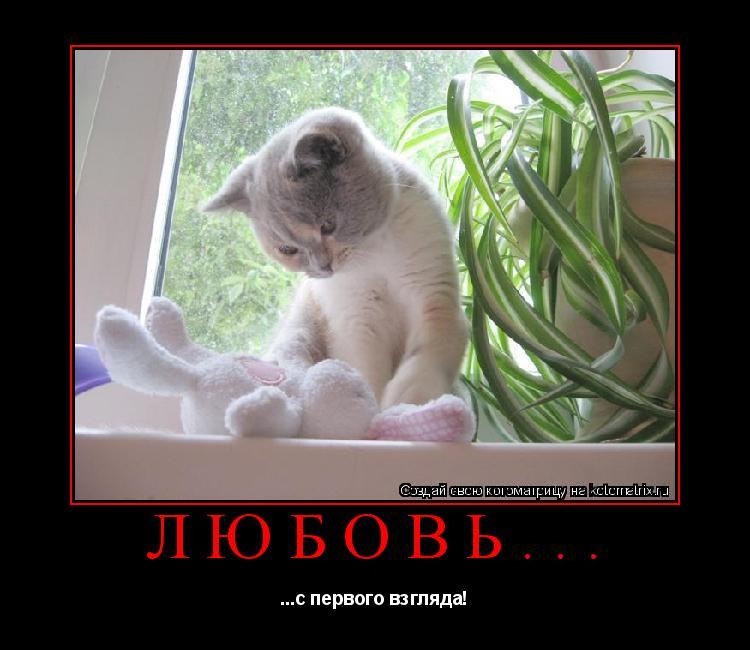 Котоматрица: любовь... ...с первого взгляда!