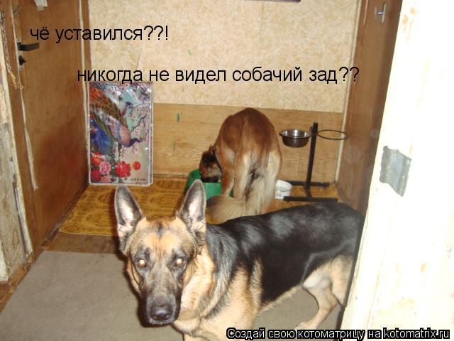 Котоматрица: чё уставился??! никогда не видел собачий зад??
