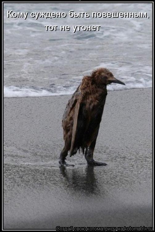 Котоматрица: Кому суждено быть повешенным,  тот не утонет