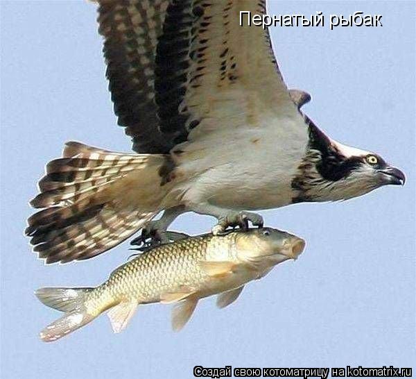 Котоматрица: Пернатый рыбак