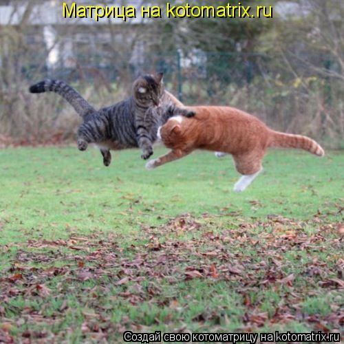 Котоматрица: Матрица на kotomatrix.ru