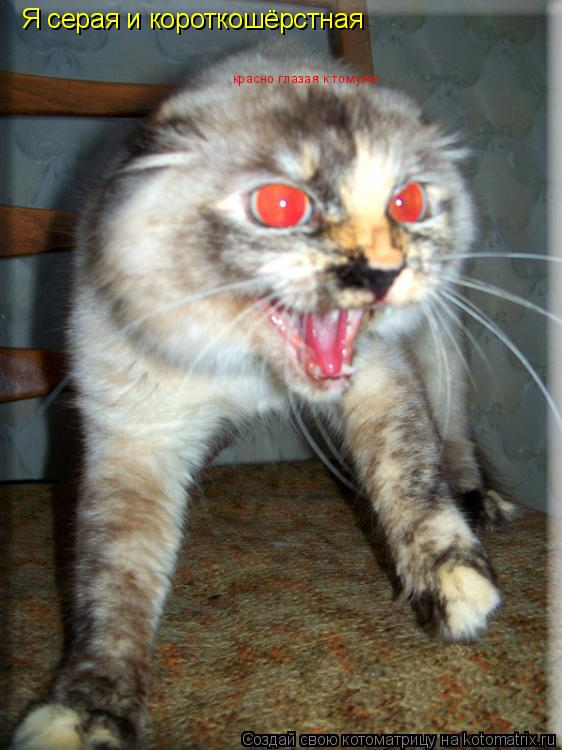 Котоматрица: Я серая и короткошёрстная красно глазая к томуже
