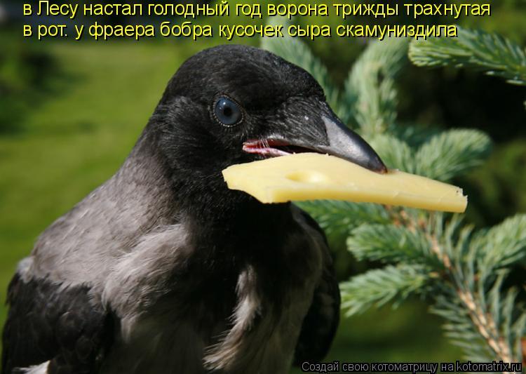 Котоматрица: в Лесу настал голодный год ворона трижды трахнутая  в рот. у фраера бобра кусочек сыра скамуниздила