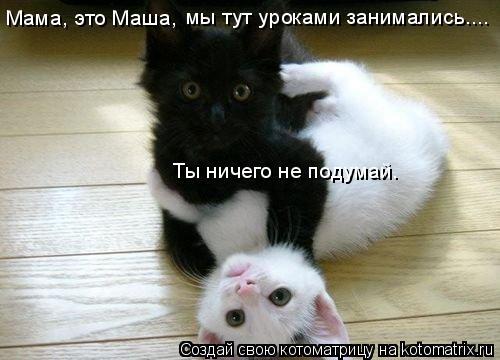Котоматрица: Мама, это Маша, мы тут уроками занимались.... Ты ничего не подумай.