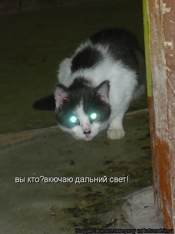Котоматрица: вы кто?вкючаю дальний свет!