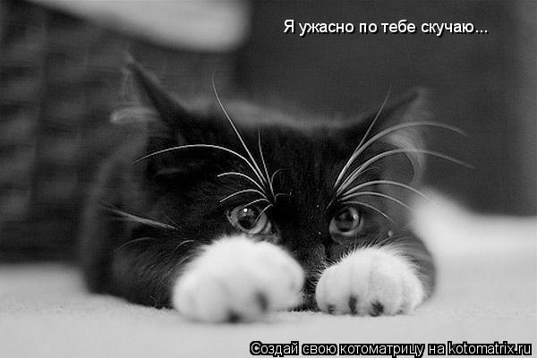 Котоматрица: Я ужасно по тебе скучаю...