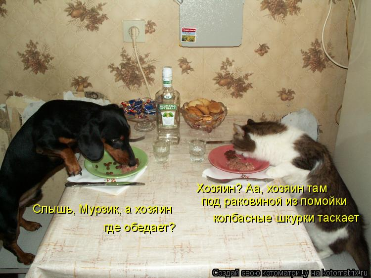 Котоматрица: Слышь, Мурзик, а хозяин  где обедает? Хозяин? Аа, хозяин там  под раковиной из помойки колбасные шкурки таскает
