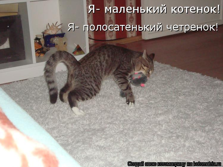 Котоматрица: Я- маленький котенок! Я- полосатенький четренок!