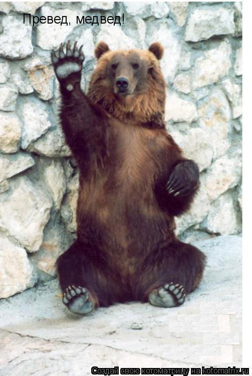 Котоматрица: Превед, медвед!