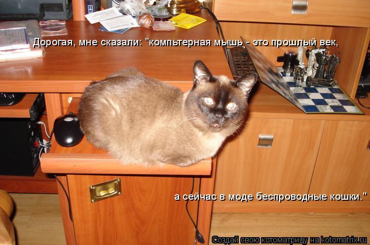 """Котоматрица: Дорогая, мне сказали: """"компьтерная мышь - это прошлый век, а сейчас в моде беспроводные кошки."""""""