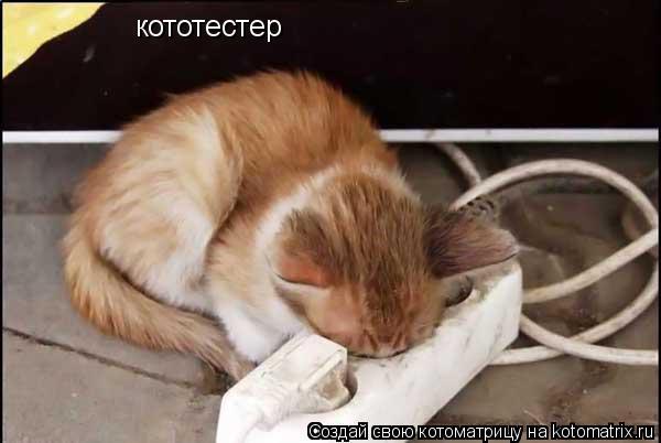 Котоматрица: кототестер