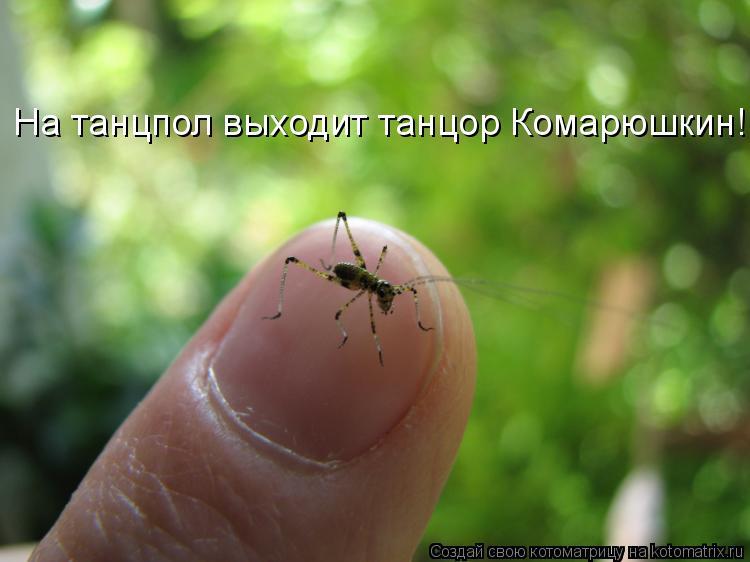 Котоматрица: На танцпол выходит танцор Комарюшкин!