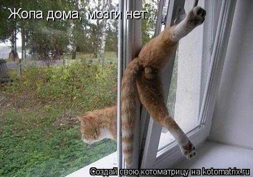Котоматрица: Жопа дома, мозги нет...