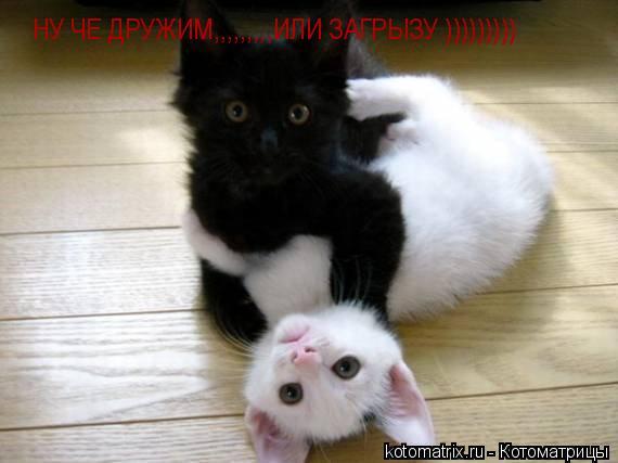 Котоматрица: НУ ЧЕ ДРУЖИМ,,,,,,,,,ИЛИ ЗАГРЫЗУ )))))))))