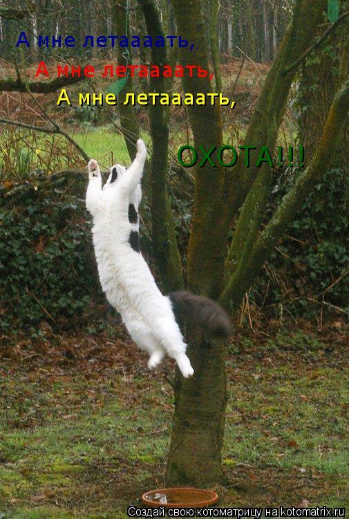 Котоматрица: А мне летаааать, А мне летаааать, А мне летаааать, ОХОТА!!!