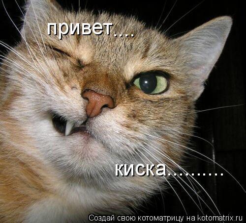 Котоматрица: привет .... киска..........