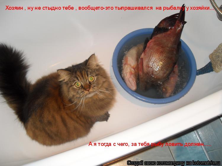 Котоматрица: Хозяин , ну не стыдно тебе , вообщето-это тыпрашивался  на рыбалку у хозяйки...  А я тогда с чего, за тебя рыбу ловить должен.....