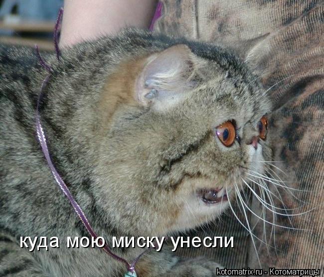 Котоматрица: куда мою миску унесли