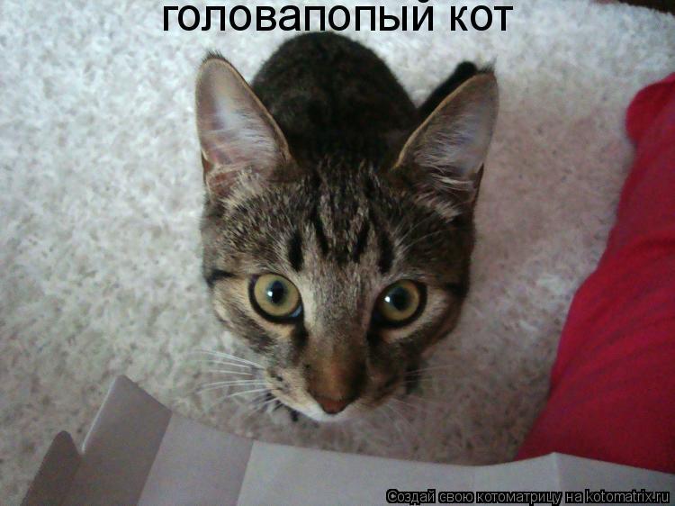 Котоматрица: головапопый кот