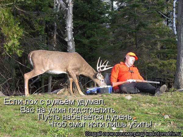 Котоматрица: Если лох с ружьём удумал, Вас на ужин подстрелить... Пусть набегается дурень, Чтоб смог ноги лишь убить!