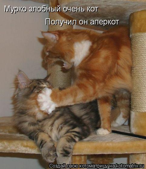 Котоматрица: Мурко злобный очень кот Получил он аперкот