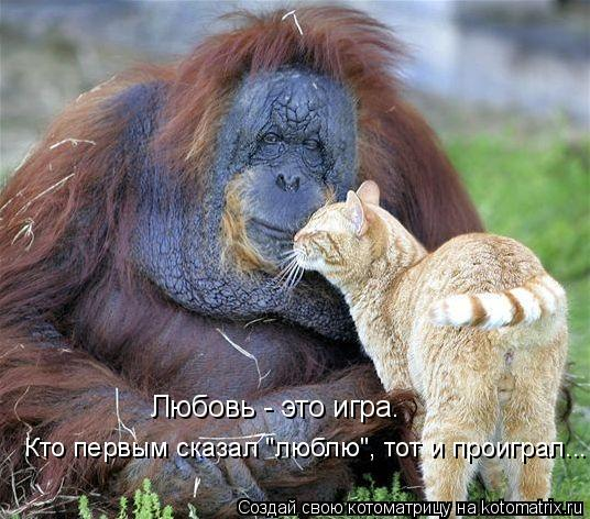 """Котоматрица: Любовь - это игра.  Кто первым сказал """"люблю"""", тот и проиграл..."""