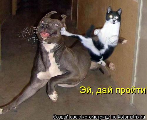 Котоматрица: Эй, дай пройти!